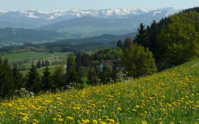 Leader Aktionsgruppe Westallgäu-Bayerischer Bodensee